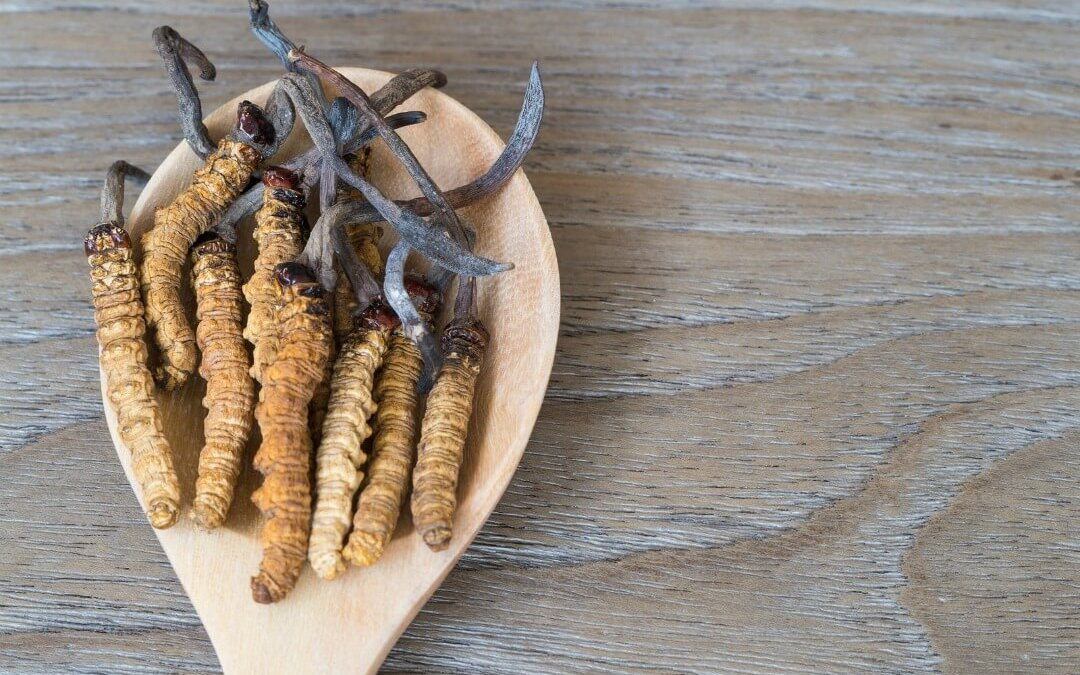 Research: Reishi And Cordyceps