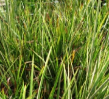brain health green grass