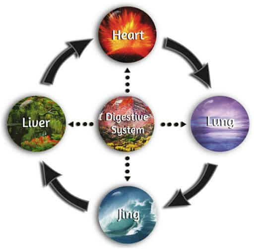 The Five Organ Systems diagram