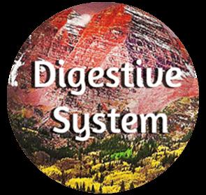 Digestive System - Organ System