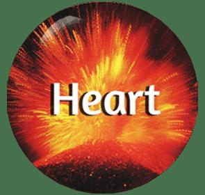 Heart - Organ System